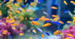 Aquarium products at Aliexpress | Filters, lamps, etc